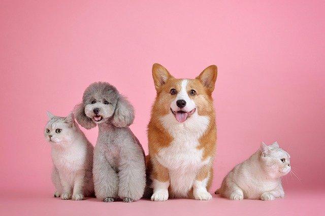 Cannabis medicinal en mascotas. Perros y gatos