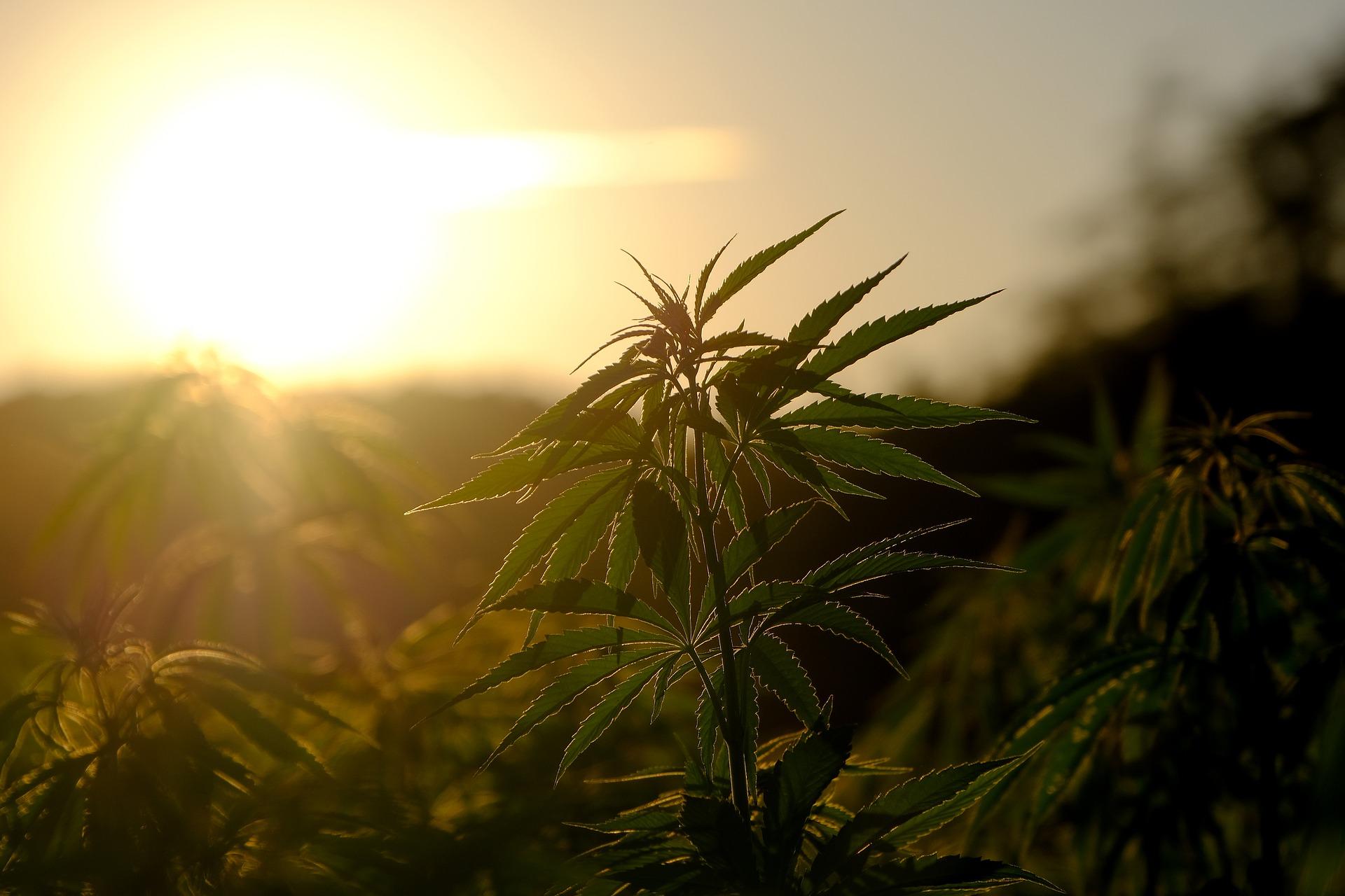 Beneficios Generales del Cannabis Medicinal post thumbnail