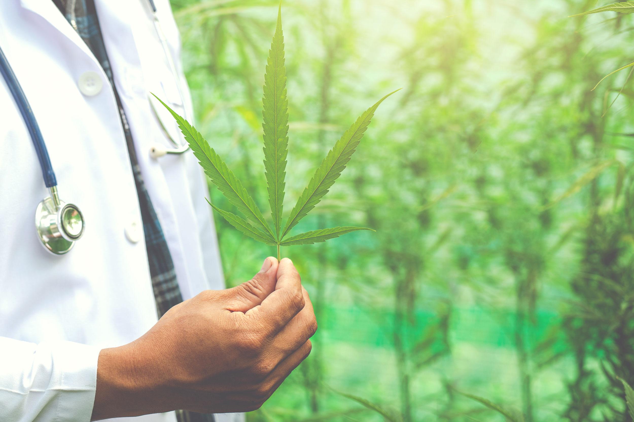 Debo informar al médico si quiero iniciar un tratamiento con cannabis? post thumbnail